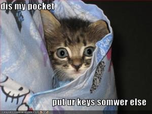 funny-pictures-kitten-asks-you-to-put-you-keys-somewhere-else
